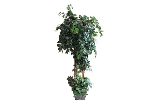 7' Ficus Tree Style 2