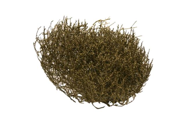 Small Tumble Weed